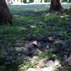 森林の中の木漏れ日