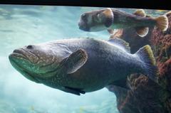 美ら海水族館 熱帯魚の海にて