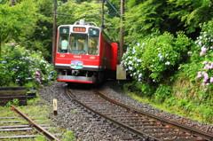 あじさい列車♪