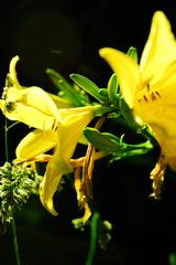 『flower』