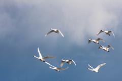 渡り鳥シリーズⅡ
