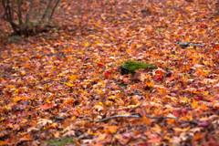 -敷き詰めて 秋-