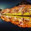 -平成最後の夜桜-