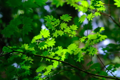 -Green-