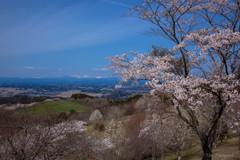 -桜越しの奥羽山脈-