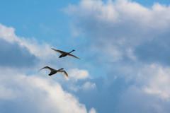 -Fly High-