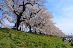 -うららかな春-