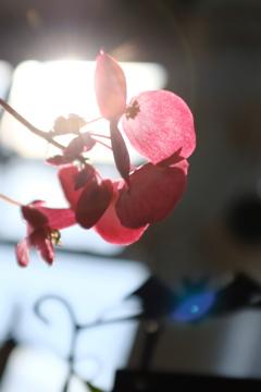 -花を求めてIII-
