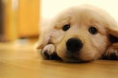 愛犬愛犬。愛犬