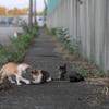 猛暑を生き延びた仔猫