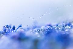雨のセレナーデ