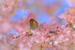 春色の恋心
