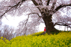 春を慈しむ