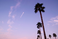 Palm Tree in the Sky