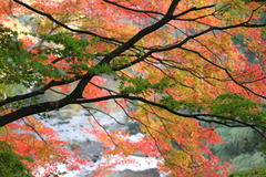 亀山湖の紅葉-1
