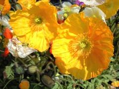 黄色い花の元気印