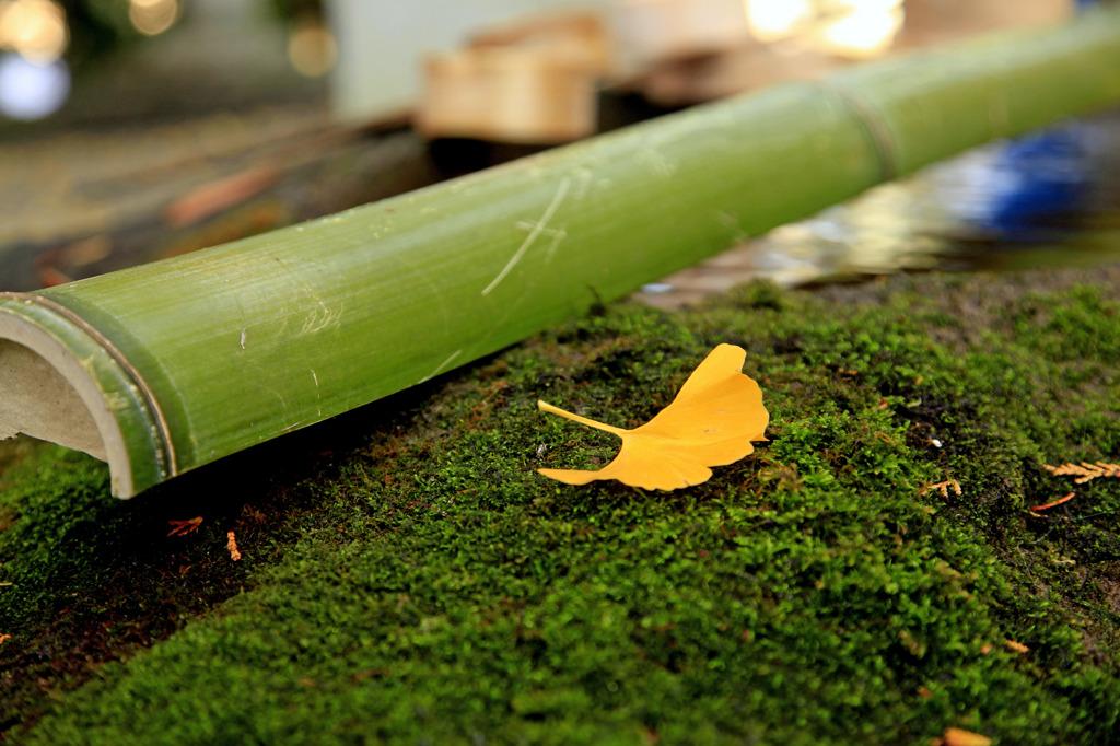 秋色 銀杏