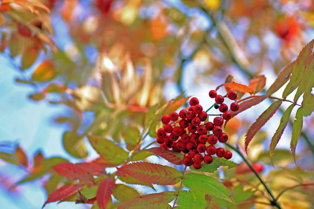 秋色 実り