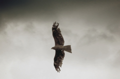 暗い空を飛ぶ