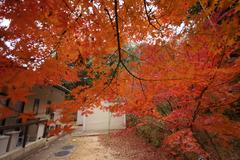 ささやかな我が家の紅葉