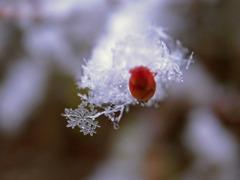 雪のカタチ
