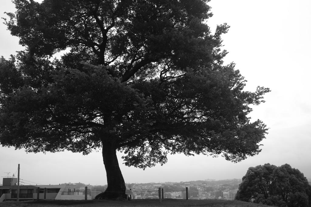 大きな木の前で・・・