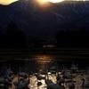 白鳥2010(染まる安曇野編)2
