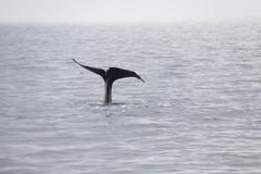 クジラのしっぽ