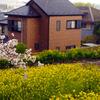 尾根緑道から見た桜と菜の花