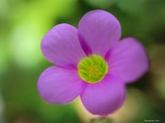 小さな花 ~小宇宙~