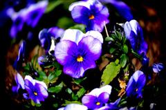 Spring ~東北の春~