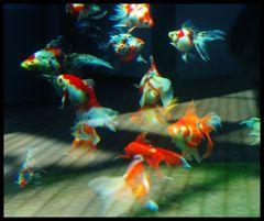金魚の飛ぶ空間
