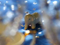星になった象