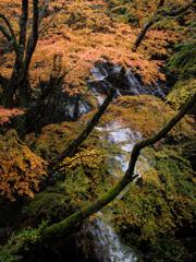 日本の四季 ~秋~