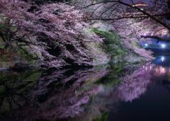 Sakura Japan ~桜~