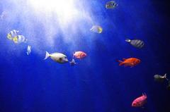南国の魚たち