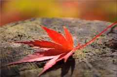 秋 燃ゆる