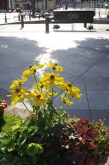 街の中の花