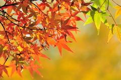 紅葉・黄葉・黄緑葉