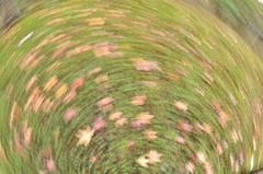 廻る秋のメリーゴーランド