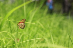 子どもと蝶
