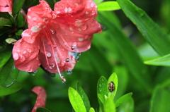 水滴のリズム
