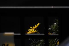 お隣の花に陽が当たる