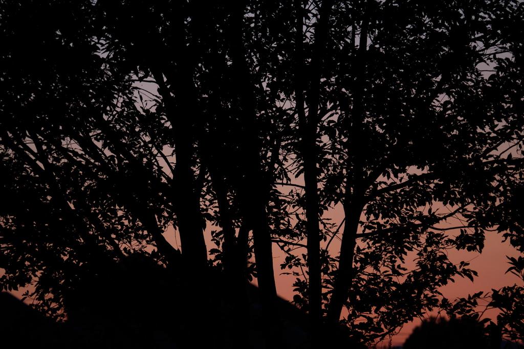 木立の夕暮れ