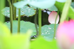 花弁のある風景