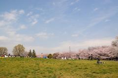 桜並木とパラボラアンテナ