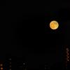 46年ぶり、ハロウィンの満月が昇る