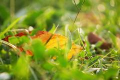 少しだけ秋の色