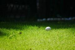 ゴルフボールのある風景