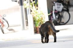 明るい街へと出かけるトラ子
